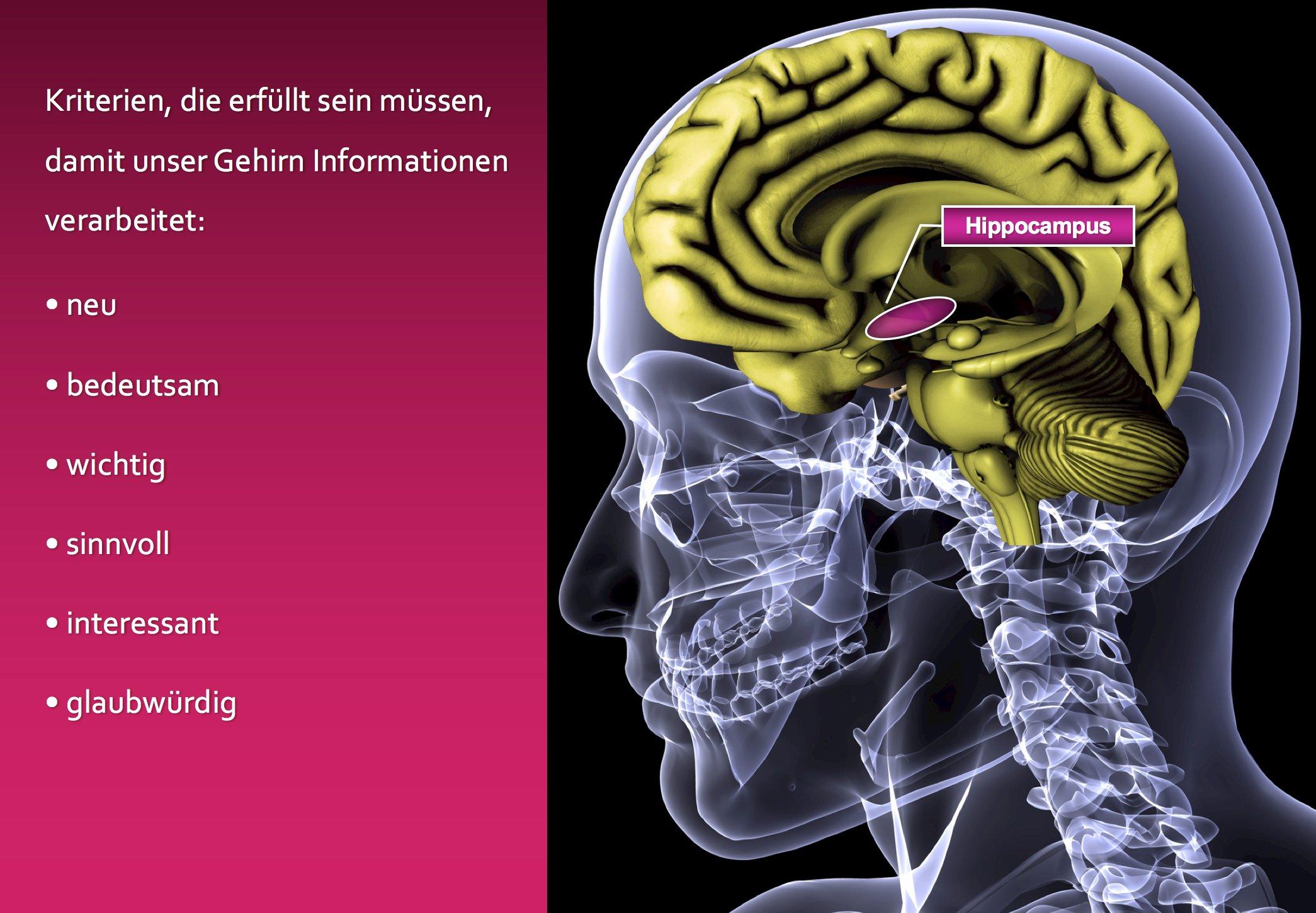 Hippocmapus - so verarbeitet unser Gehirn Informationen